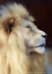 Basking Lion by Vulpa-Art