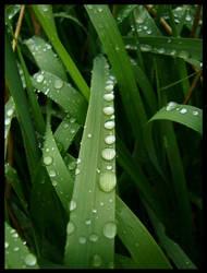 grassdroplet 2 by medium-sk8er-14