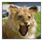 angry akimba