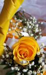 Wedding Rose 1 by LovelyBPhotography