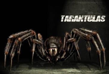 spider tarentulas