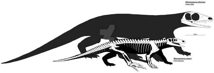 Mesenosaurus