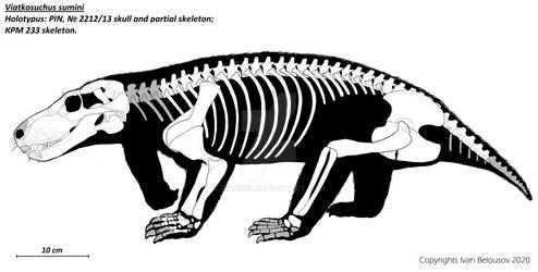 Viatkosuchus sumini
