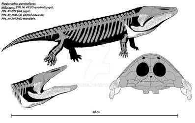 Plagiorophus paraboliceps