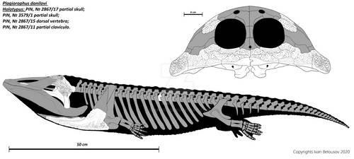 Plagiorophus danilovi by Ivanbel