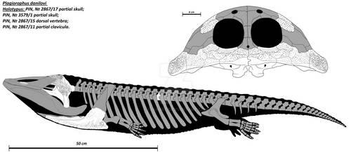 Plagiorophus danilovi