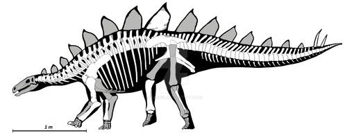 Stegosauria indet. from Sharypovo (Russia) by Ivanbel