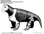 Ulemosaurus svijagensis