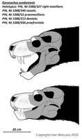 Gorynychus sundyrensis
