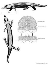 Chroniosaurus dongusensis