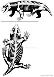 Australobarbarus kotelnitshi
