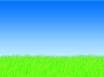Grass With Blue Sky
