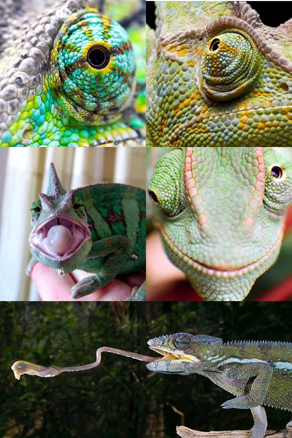 jules_chameleon_refs_by_meettheghost-dbt