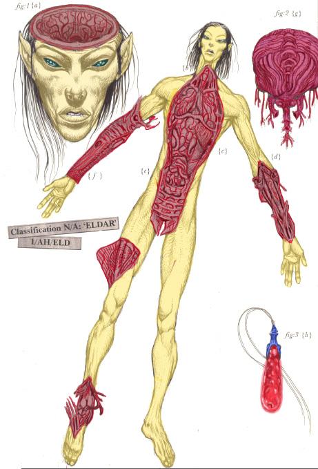Eldar Dissection Colored by ColonelMarksman on DeviantArt