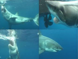 White Shark I by BioHazardSystem