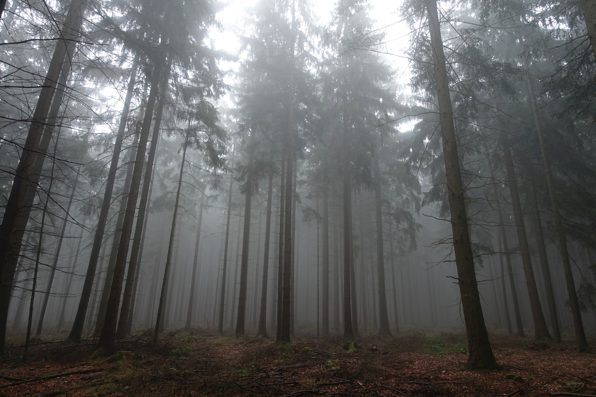 Misty Mountain Top in the Forest