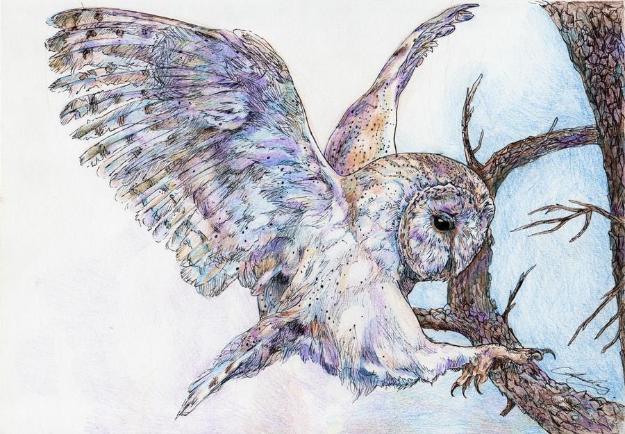 Barn Owl by ohmindflowers