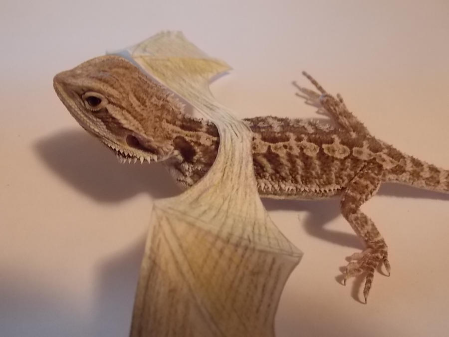 How To Make A Bearded Dragon Costume Scarys dragon By