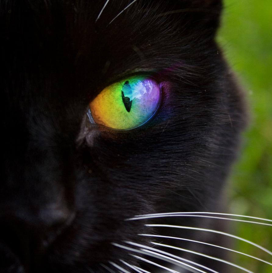 rainbow cat wallpapers - photo #4