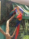 .:: parrots ::.
