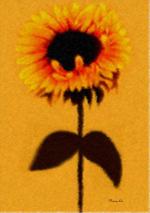 Sunflower by nancylix