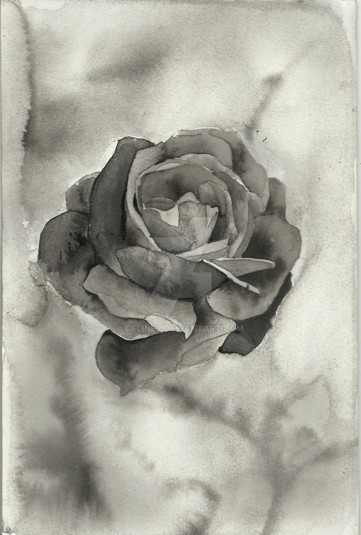 Black rose by Celine9