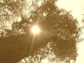 A Single Light by Sunburnne