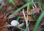 Schnecke/ Snail 1