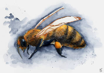 Bee by orleana