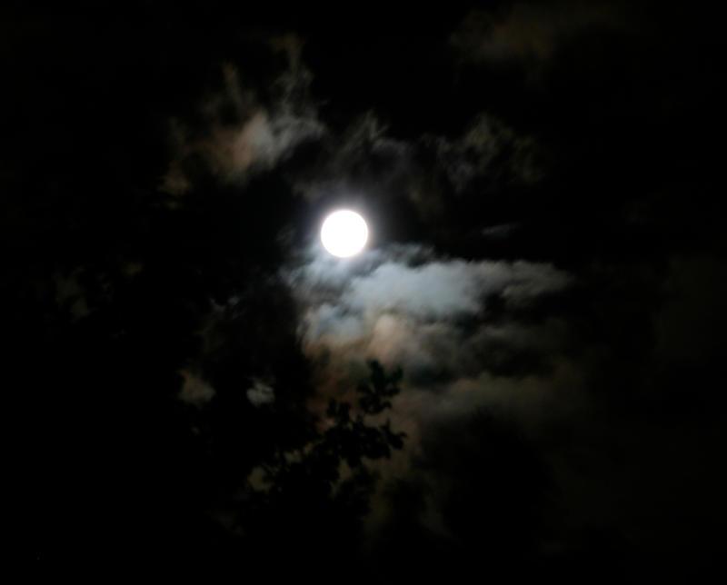 Decerulean Moon by ferrhousulfate