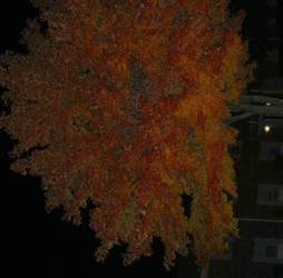 Creepy Indiana Urban Fall by ferrhousulfate