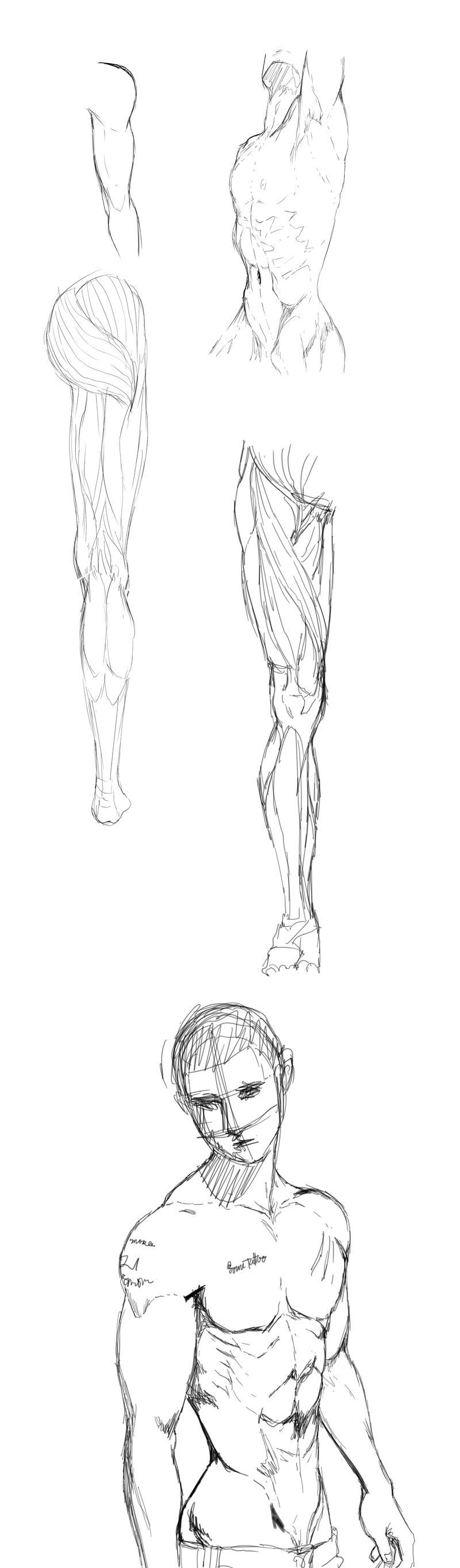 Guy Anatomy Practice By Snailords On Deviantart