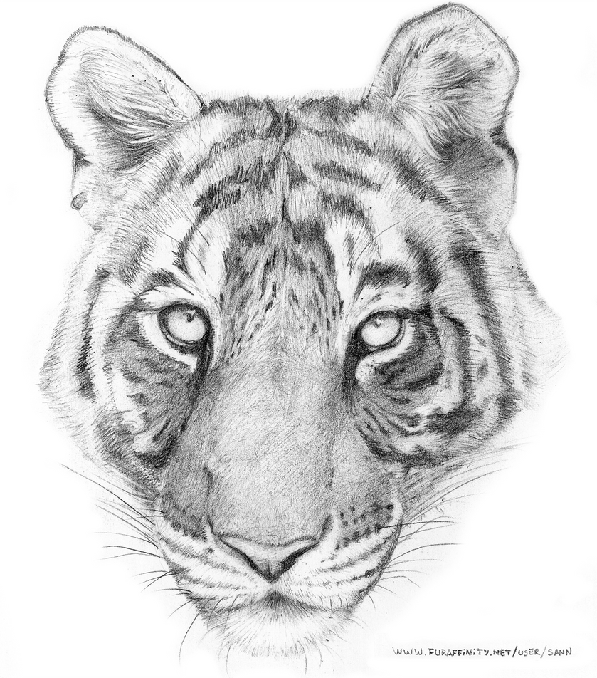 Tiger Head Pencil by renadrawer on DeviantArt