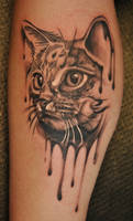 cat by Robert-Franke