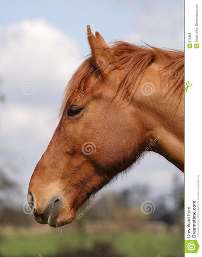 descriptive essay of a farm Descriptive narrative, research title length color rating : descriptive essays - the horse farm - the horse farm i am jarred out of a relaxing sleep by a voice yelling my name in a loud whisper.