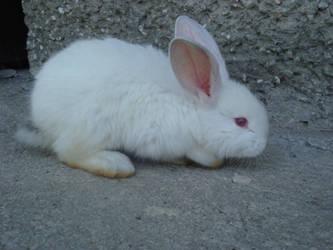 Alice in Wonderland White Rabbit by NirnaetStock