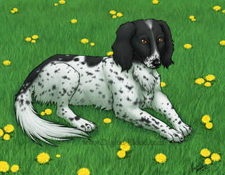 AC - Commish- Dog Portrait