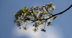 Flowers against the sky
