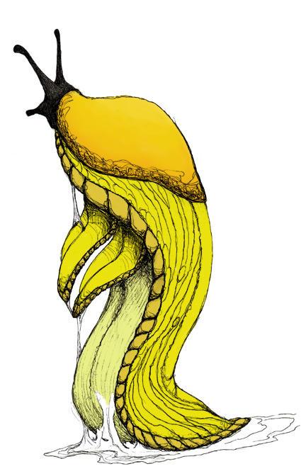 Banana Slug anthro by darkbloodwyvern on DeviantArt