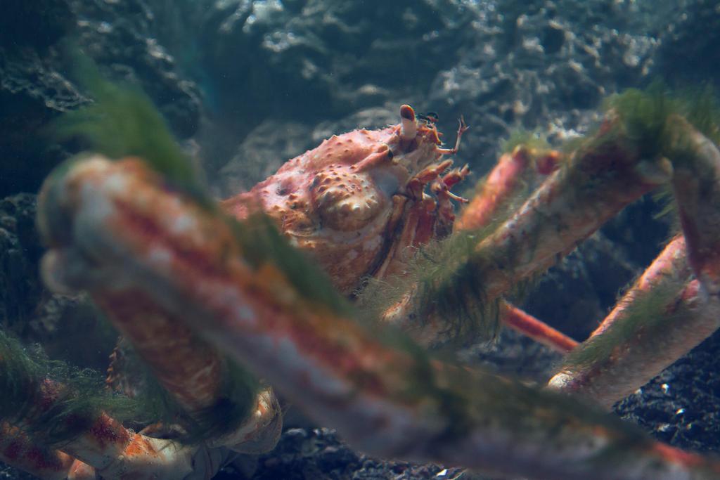 Crab by koujaku