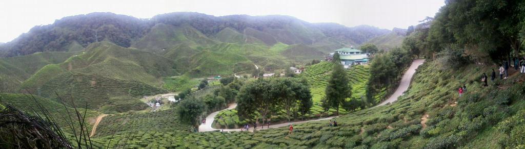 Tea Farm at Cameron Highland! by Qiaros