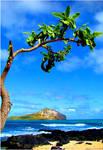 Hawaii's Coast