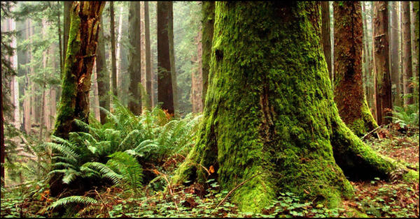 Humboldt Redwoods by rivaraftin1977