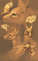 Corsac foxes by ArsFatalis