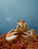 Noisy Shrimp by lkermel