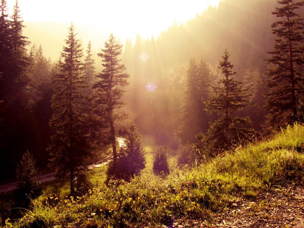 Sun rays II by fahhhhh