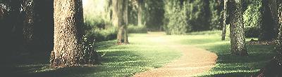 Bosque Minimalist by rolow-art