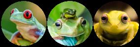 Frog Divider (F2U)