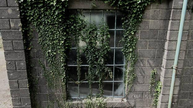 Ivy shades by BlackFluffyRainbows