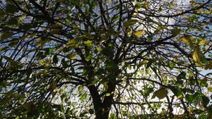 sunshine autumn